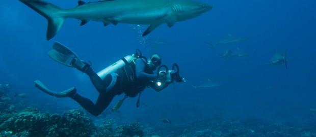 sharks0001