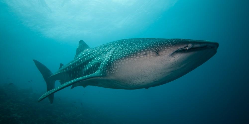 maldives_uw_2013-203