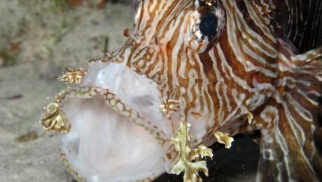 Scuba Diving Liveaboard Fish