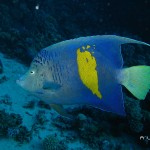 Scuba Diving Liveaboard Fish