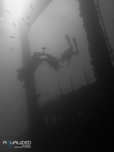 Liveaboard north-wreck safari