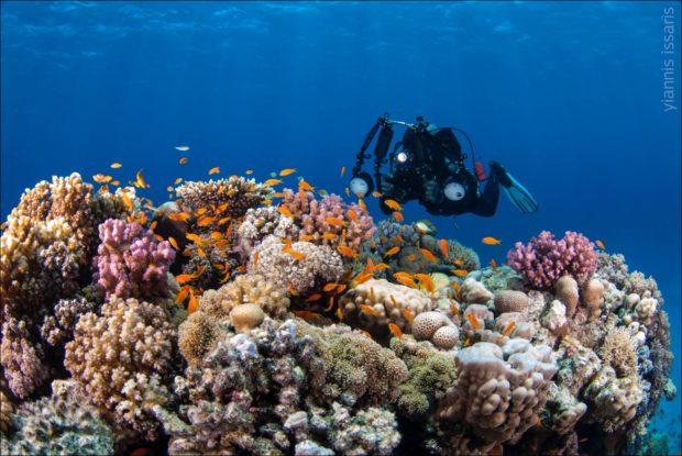 https://www.aqualized.com/underwater_photography/