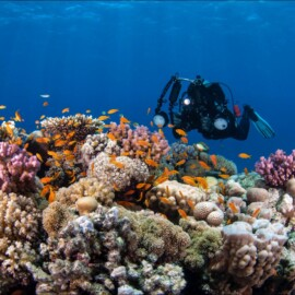 Wreck and corals in Red Sea